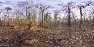 Sferisch panorama 360 graden in het bos Royalty-vrije Stock Afbeelding