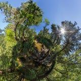 Sferisch panorama van kreek 360.180 in een dichte bos groene litt Stock Foto