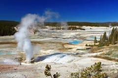 Sfiato nero del vapore del rivelatore di cortocircuiti a Norris Geyser Basin, parco nazionale di Yellowstone, Wyoming immagini stock libere da diritti