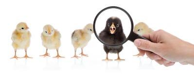 Sfida da essere differente Immagini Stock