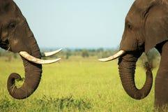 Sfida dell'elefante Immagini Stock Libere da Diritti