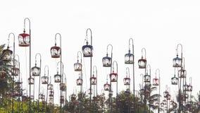Sfida della colomba dell'asiatico Fotografie Stock