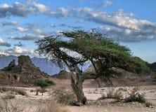 Sfinks-stone royalty free stock photography