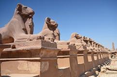 Sfinksy przy Karnak świątynią Luxor Egipt Zdjęcia Royalty Free