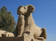 Sfinx bij Luxor Tempel, Egypte Royalty-vrije Stock Afbeeldingen