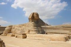 Sfinx på återställandet sommar för cheopsegypt främre giza pyramid Arkivbilder