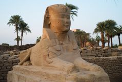 Sfinx på ingången av den Luxor templet royaltyfri foto