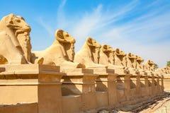 Sfinxaveny egypt luxor Royaltyfri Fotografi