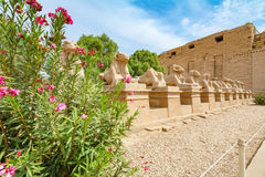Sfinxaveny egypt luxor Arkivfoton