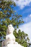 Sfinxstandbeeld met vrouwelijk gezicht in zonlicht Stock Foto's