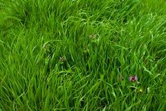 Sfondi naturali astratti con il bokeh di bellezza Concetto ecologico Fotografia Stock Libera da Diritti