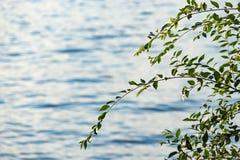Sfondo naturale con la superficie dell'acqua ed i rami di albero immagini stock