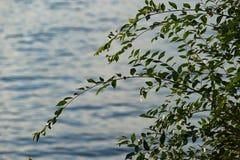 Sfondo naturale con la superficie dell'acqua ed i rami di albero immagine stock