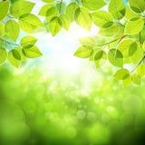 Sfondo naturale con le foglie Fotografia Stock Libera da Diritti