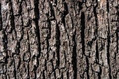 Sfondo naturale Corteccia di albero Fotografia Stock Libera da Diritti