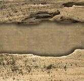 Sfondo naturale costolato del divideron del Driftwood immagine stock libera da diritti