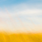 Sfondo naturale Defocused del cielo e dell'erba Fotografia Stock