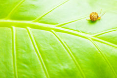 Sfondo naturale del foglio verde Fotografia Stock