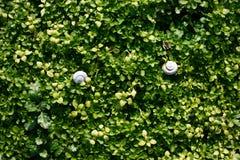Sfondo naturale dell'erba verde Vista superiore fotografie stock libere da diritti