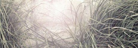 Sfondo naturale dell'insegna di alta erba Fotografie Stock