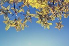 Sfondo naturale della primavera con le giovani foglie Fotografia Stock Libera da Diritti