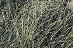 Sfondo naturale di alta erba Fotografia Stock