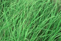 Sfondo naturale di alta erba Fotografia Stock Libera da Diritti