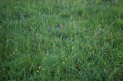 Sfondo naturale di erba un giorno di estate Immagini Stock