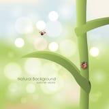 Sfondo naturale Ladybird su un gambo un giorno soleggiato Fotografia Stock