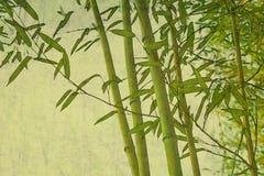Sfondo naturale strutturato di zen di bambù Fotografie Stock