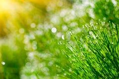 Sfondo naturale verde Immagini Stock Libere da Diritti