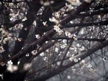 Sforzo dei fiori Fotografia Stock