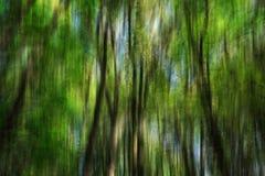 Sfuocatura astratta del fondo degli alberi Fotografie Stock
