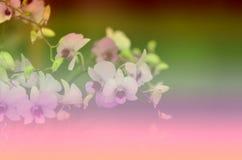 Sfuocatura d'annata del fondo dei bei modelli floreali per la pendenza Fotografia Stock Libera da Diritti