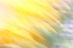 Sfuocatura del girasole Immagini Stock Libere da Diritti