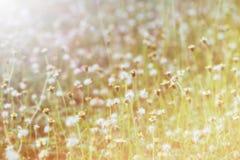 Sfuocatura del vetro del fiore sul tono dolce fotografia stock libera da diritti
