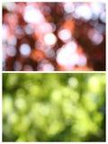 Sfuocatura della natura Fotografie Stock Libere da Diritti