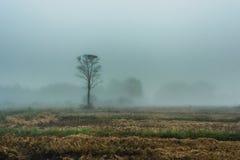 Sfuocatura della passeggiata della nebbia dei paesaggi di mattina Immagini Stock