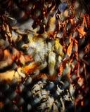 sfuocatura della scimmia Fotografia Stock Libera da Diritti