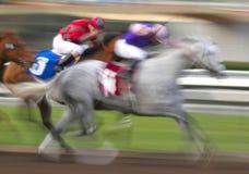Sfuocatura di movimento dei cavalli di corsa Fotografie Stock