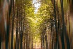 Sfuocatura dorata del farirytale della foresta di autunno Fotografia Stock Libera da Diritti