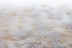Sfuocatura molle della pelliccia jpg Immagine Stock
