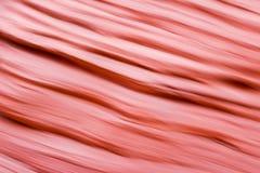 Sfuocatura navajo dell'arenaria Fotografia Stock Libera da Diritti