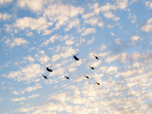 SG50 - Desfile aéreo dos helicópteros Fotografia de Stock