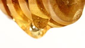 Sgocciolatura del miele da un cucchiaio di legno, su bianco video d archivio