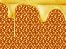 Sgocciolatura del miele sul fondo del favo Immagine Stock Libera da Diritti