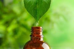 Sgocciolatura dell'olio essenziale nella bottiglia immagini stock