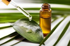 Sgocciolatura dell'olio essenziale sulla foglia verde dalla pipetta immagini stock