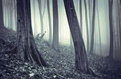 Sgocciolatura della pioggia in una foresta con nebbia fotografie stock