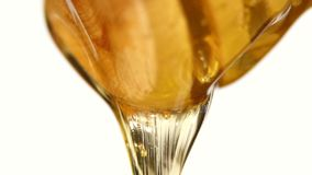 Sgocciolatura spessa del miele, sul bianco video d archivio